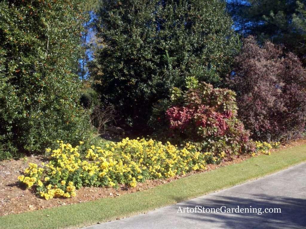 Hedgerow or border garden