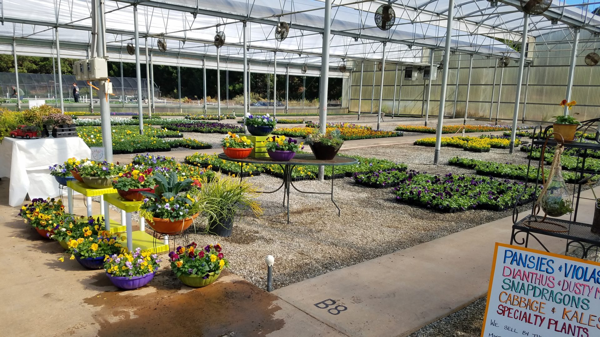 Nursery with tons of annuals