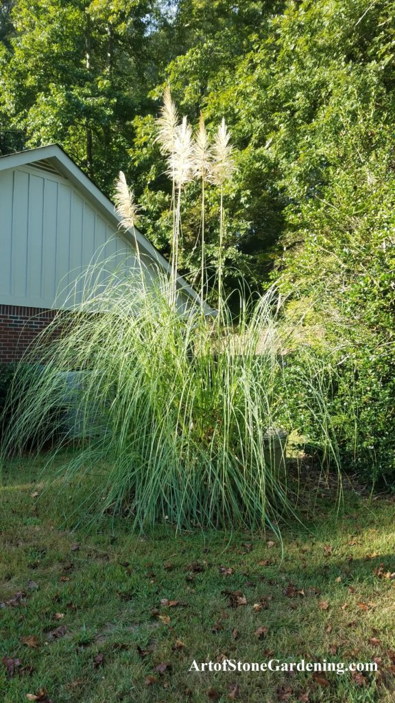 hiding a utility box with pampas grass