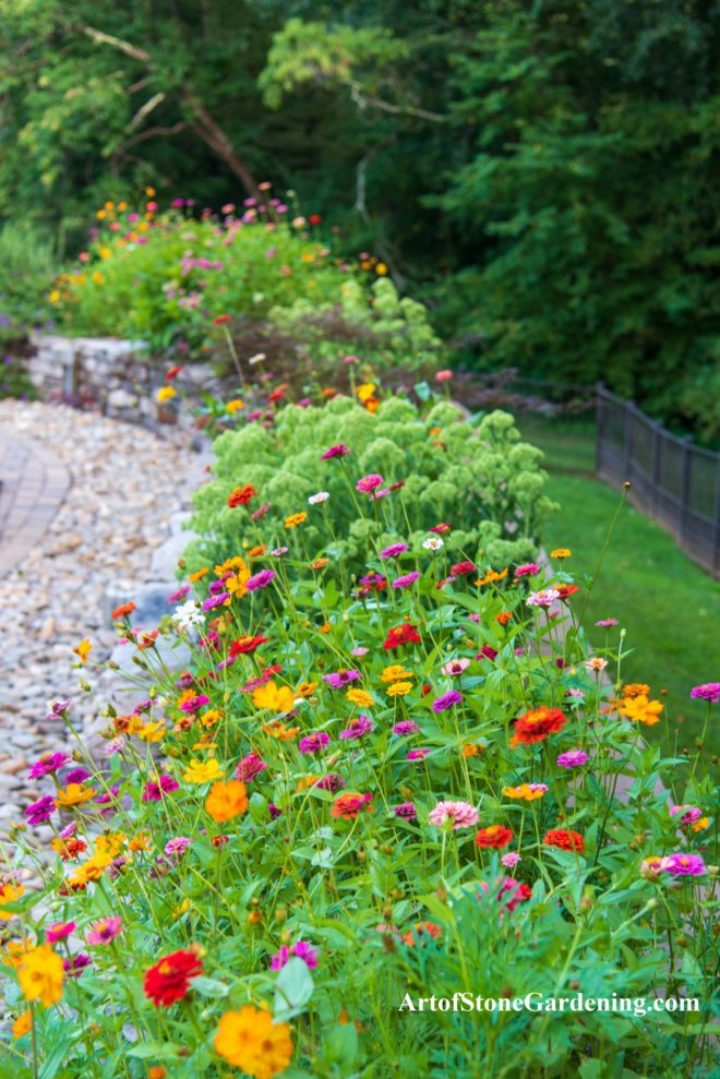 Colorful zinnias in stone planter