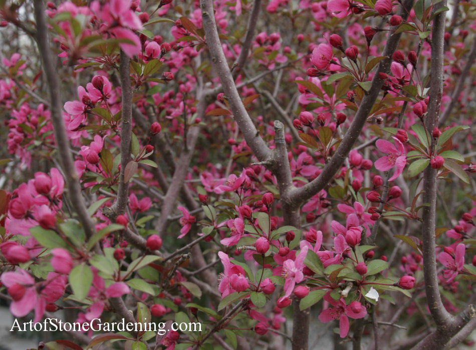 bird garden tree crabapple