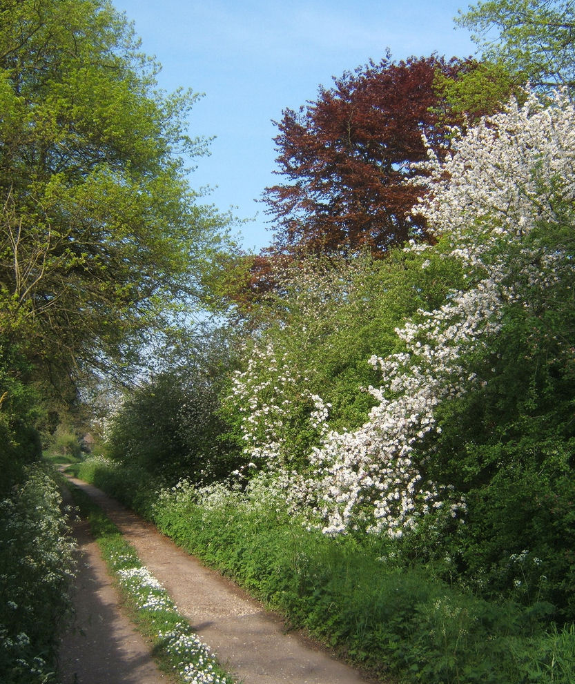 Wildlife hedgerow country road