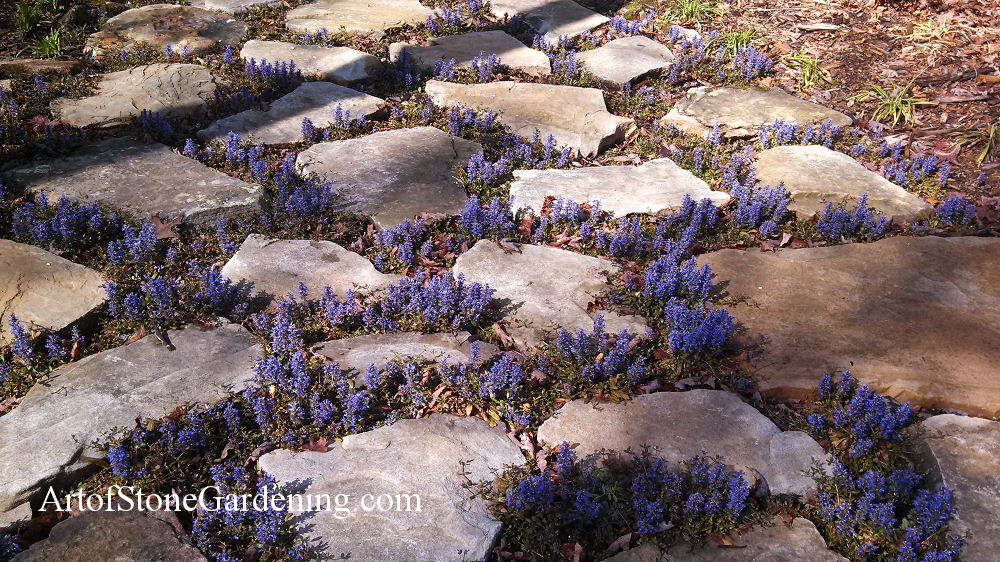 Groundcover and stepping stones