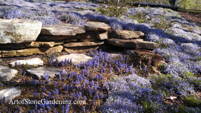 Stone wall and groundcover landscape